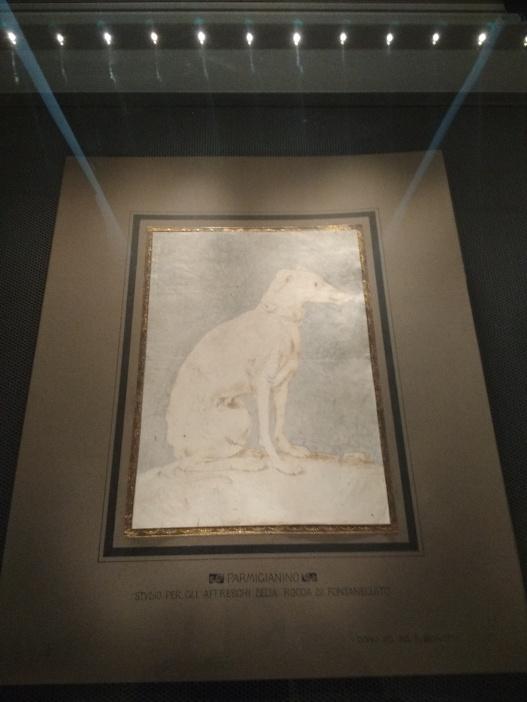 Francesco Mazzola detto il Parmigianino (1503-1540), Levriero